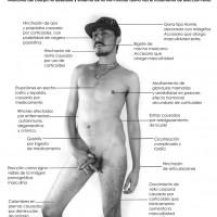 Anatomy-of-no-pornstar