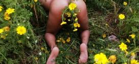 Tra(n)splantar: Poéticas anales y Amor Vegetal