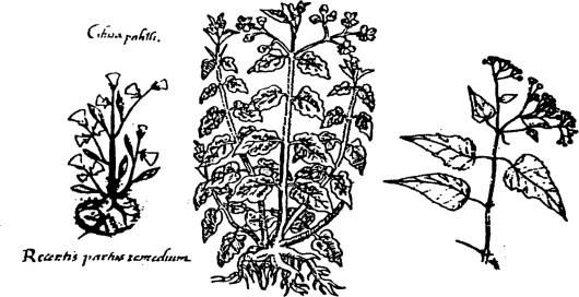 Brebajes y conjuros con plantas mexicanas para cuidar la cuerpa