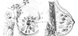 Proyecto Ovotabú: Introducción a la Anatomía y Fisiología de las féminas género diverses